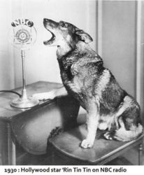 Rin Tin Tin Radio